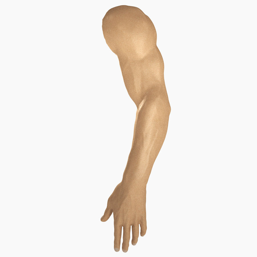 男性の腕の解剖学 royalty-free 3d model - Preview no. 1