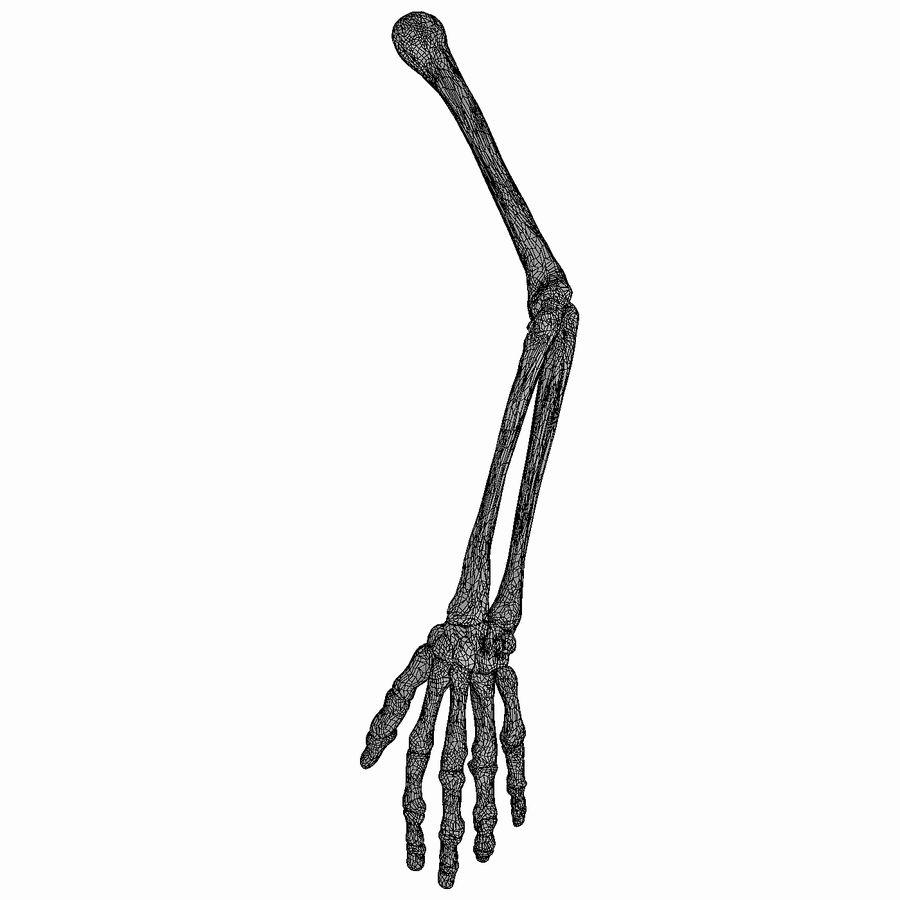 男性の腕の解剖学 royalty-free 3d model - Preview no. 9