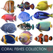 coral fishes collection 3d model