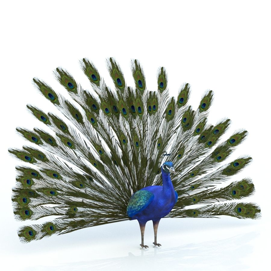 Peacock royalty-free 3d model - Preview no. 6