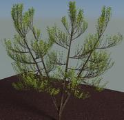 drzewo niskie poli 3d model