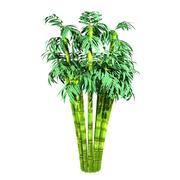 Árvore de bambu 3d model