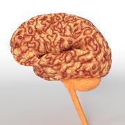 Anatomi İnsan Beyin Sinir Cerebrum 3D modeli 3d model