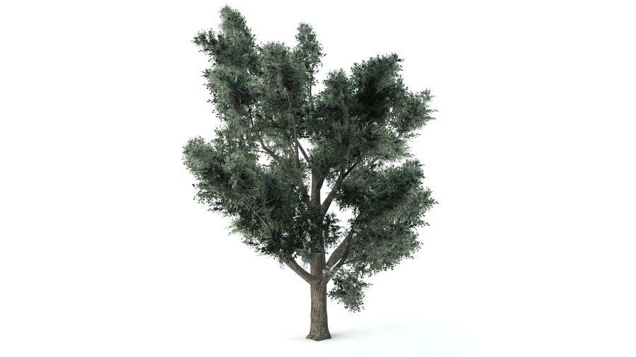 A set of vegetation royalty-free 3d model - Preview no. 3