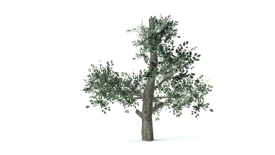 A set of vegetation royalty-free 3d model - Preview no. 5