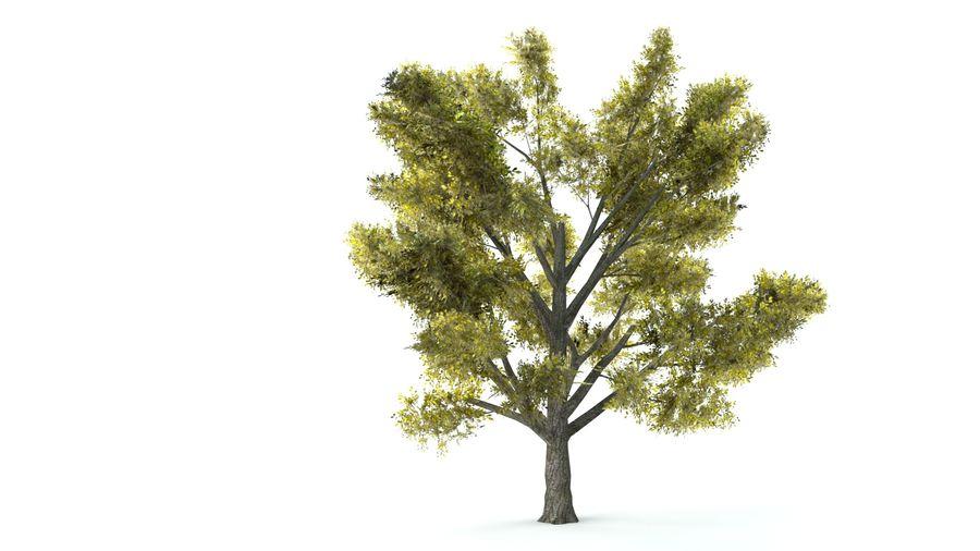 A set of vegetation royalty-free 3d model - Preview no. 4