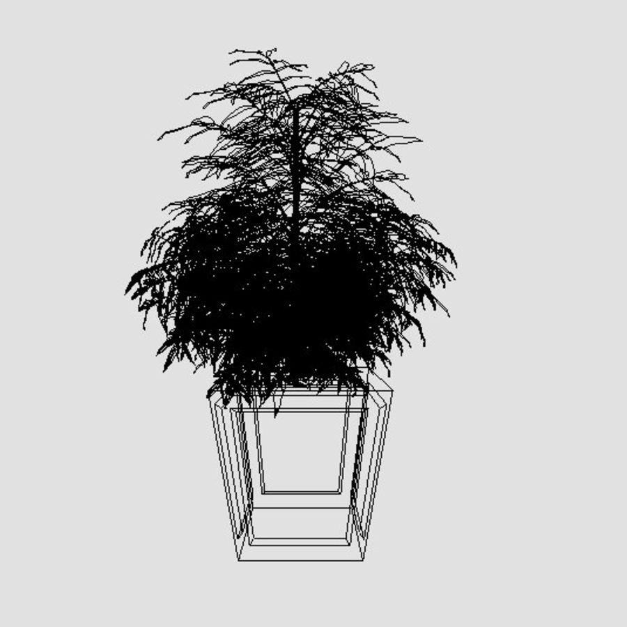 Dekorative Pflanze royalty-free 3d model - Preview no. 5