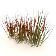 Imperata Cylindrica Red Baron 3d model