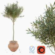 鍋にオリーブの木 3d model