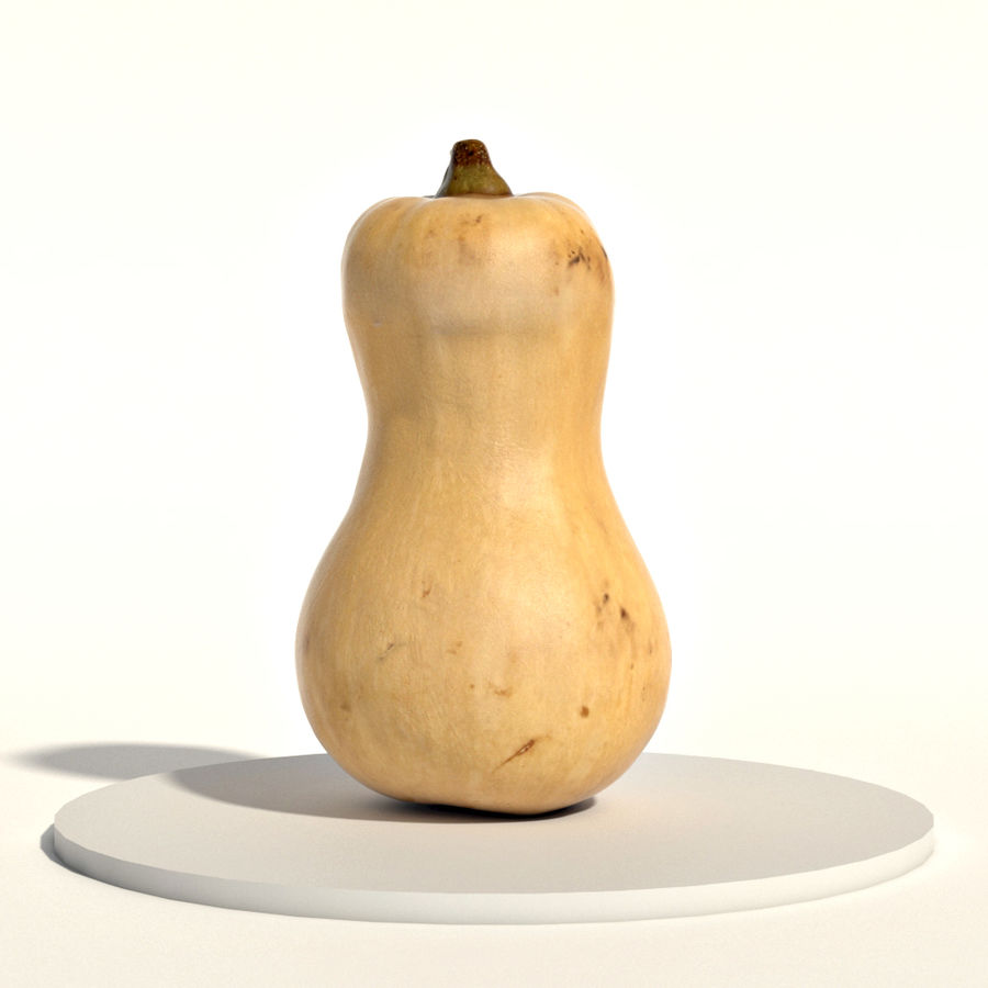 Butternut royalty-free 3d model - Preview no. 4