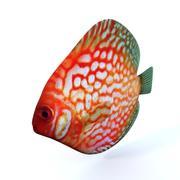 Disco fish 3d model