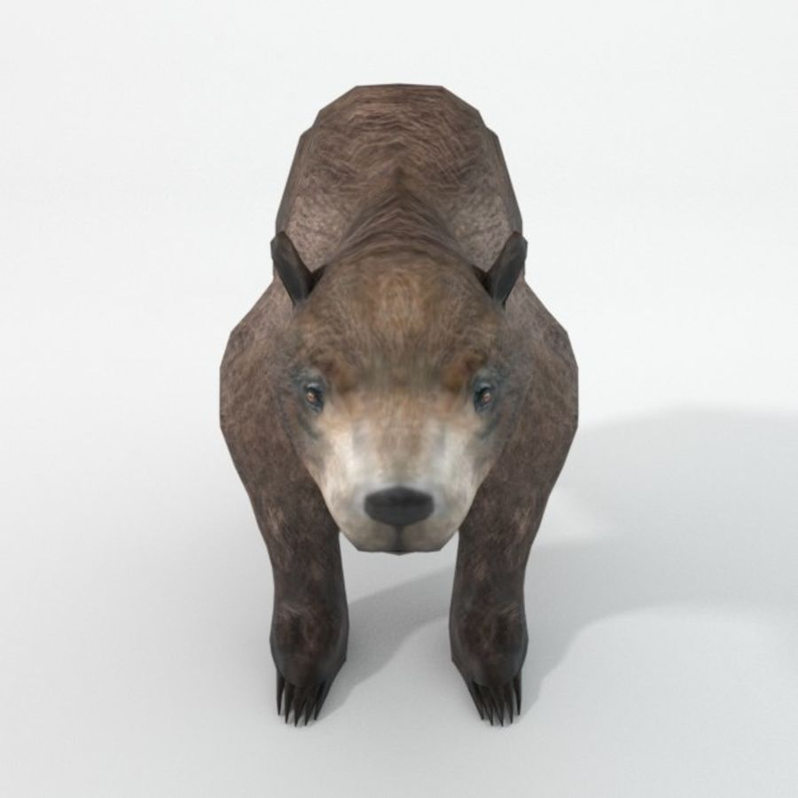 Grizzlybär royalty-free 3d model - Preview no. 5