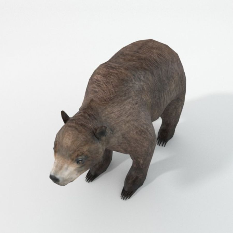 Grizzlybär royalty-free 3d model - Preview no. 2