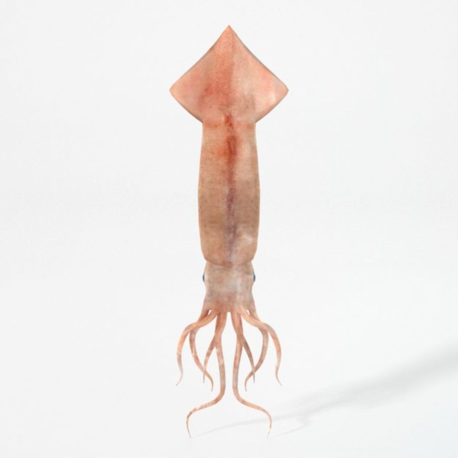 Squid royalty-free 3d model - Preview no. 4