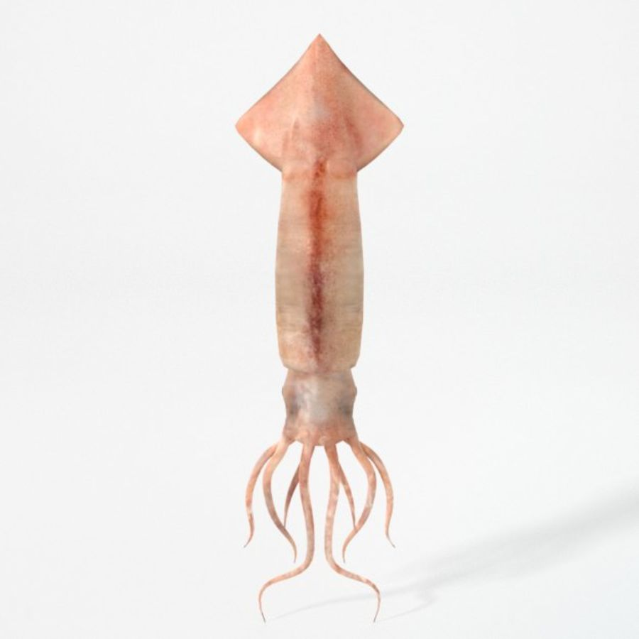 Squid royalty-free 3d model - Preview no. 2