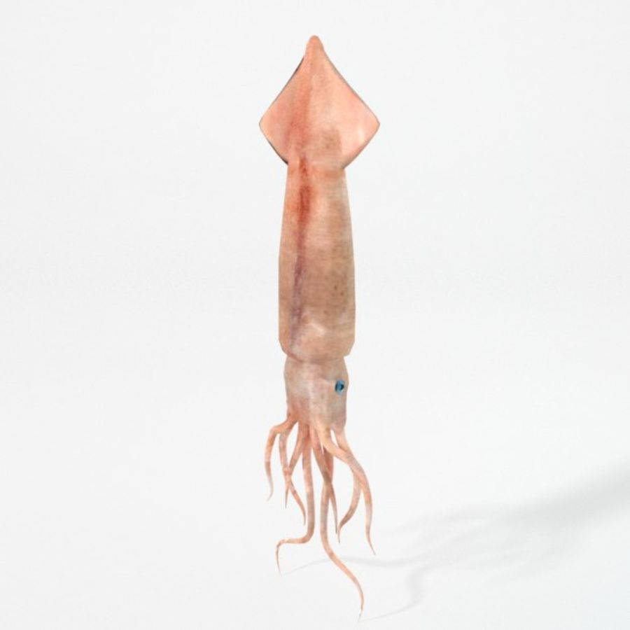 Squid royalty-free 3d model - Preview no. 1