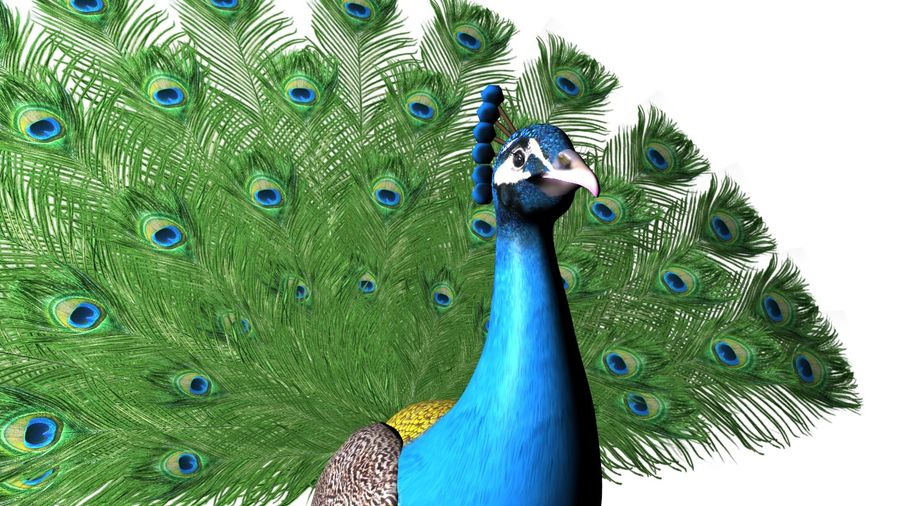 Peacock royalty-free 3d model - Preview no. 1
