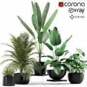 Coleta de plantas 119 GrowFX 3d model
