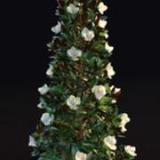 Магнолия Грандифлора, цветение (3м) 3d model