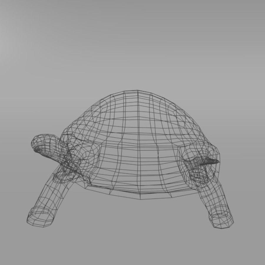 Tartaruga royalty-free 3d model - Preview no. 8