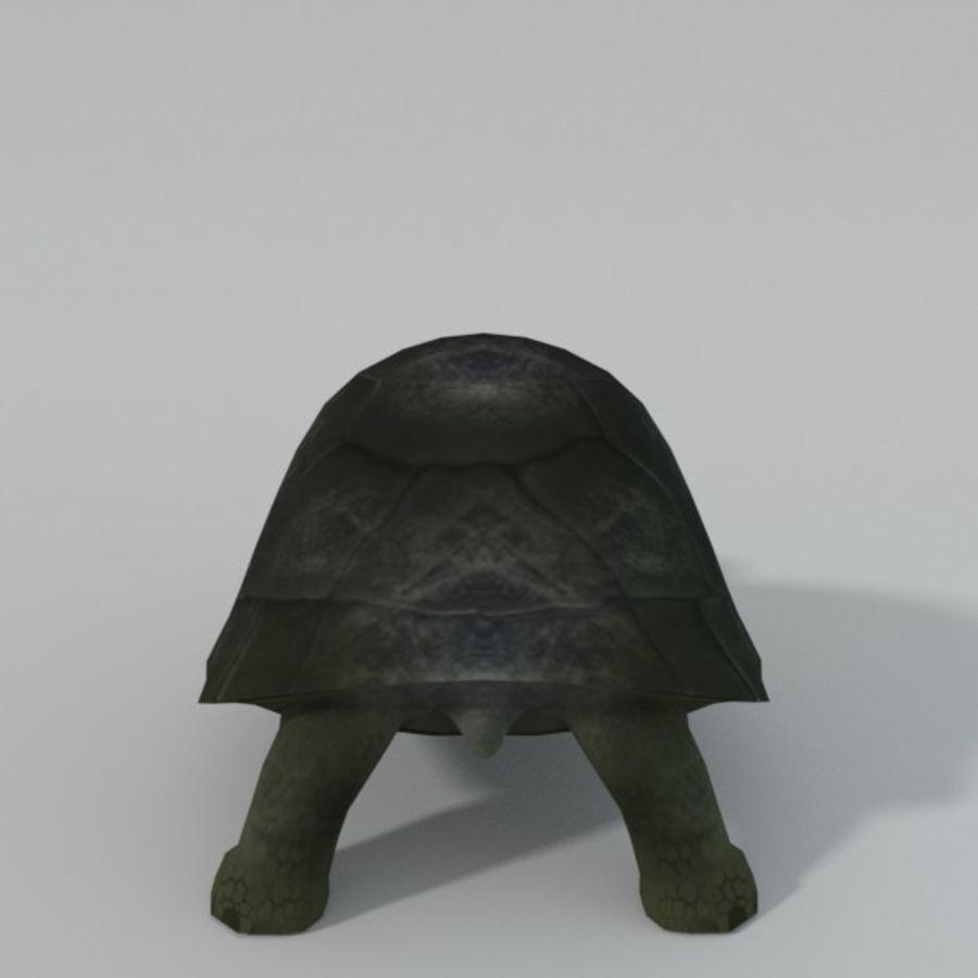 Tartaruga royalty-free 3d model - Preview no. 2
