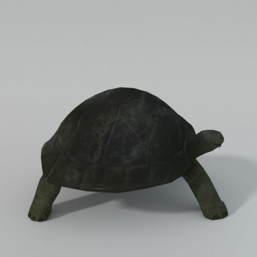 Tartaruga royalty-free 3d model - Preview no. 7