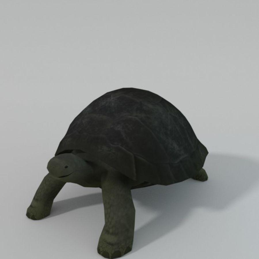 Tartaruga royalty-free 3d model - Preview no. 1