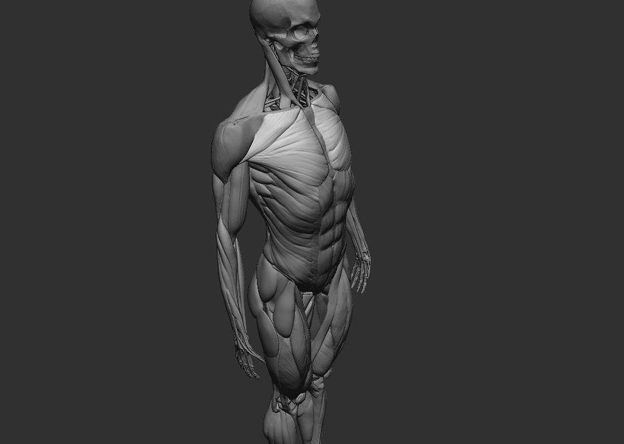 Anatomy References 3d Model 19 Ztl Obj Free3d