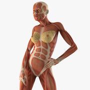 Anatomia kobiecego układu mięśniowego zmontowana do modelu 3D Cinema 4D 3d model