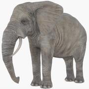 Éléphant (gréé) 3d model