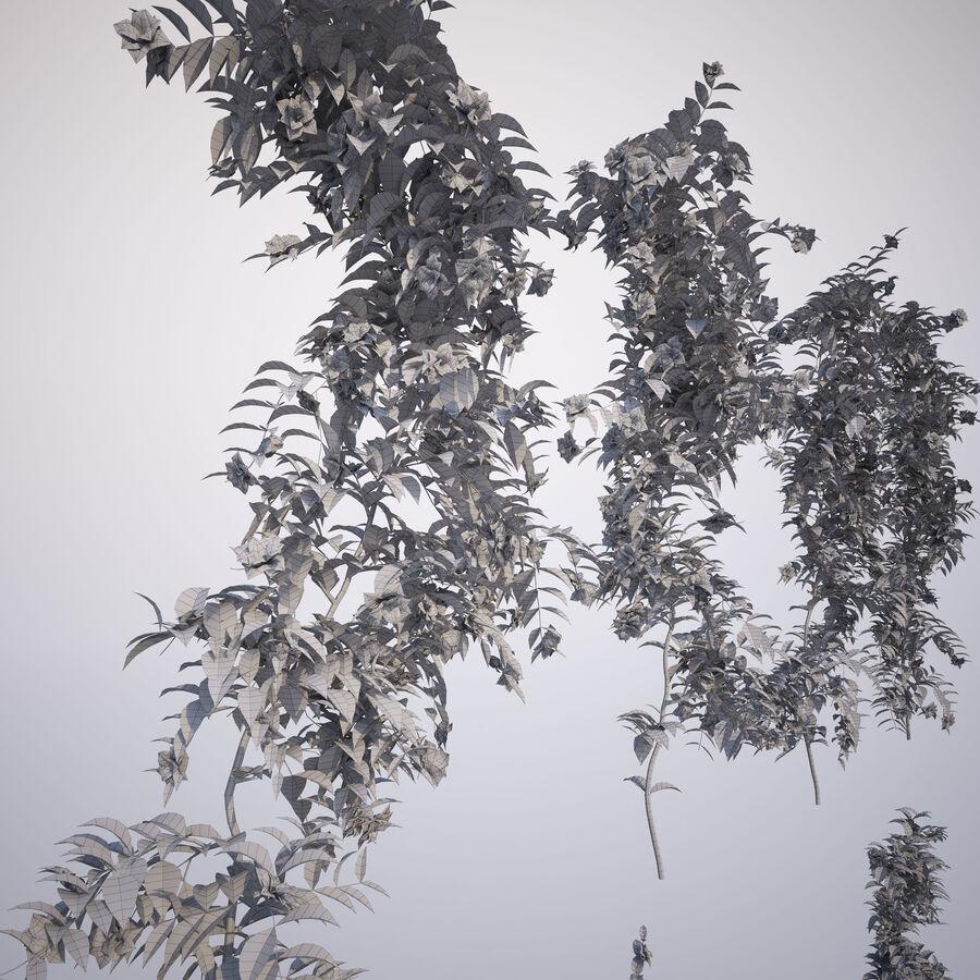 Generieke klimplanten royalty-free 3d model - Preview no. 14