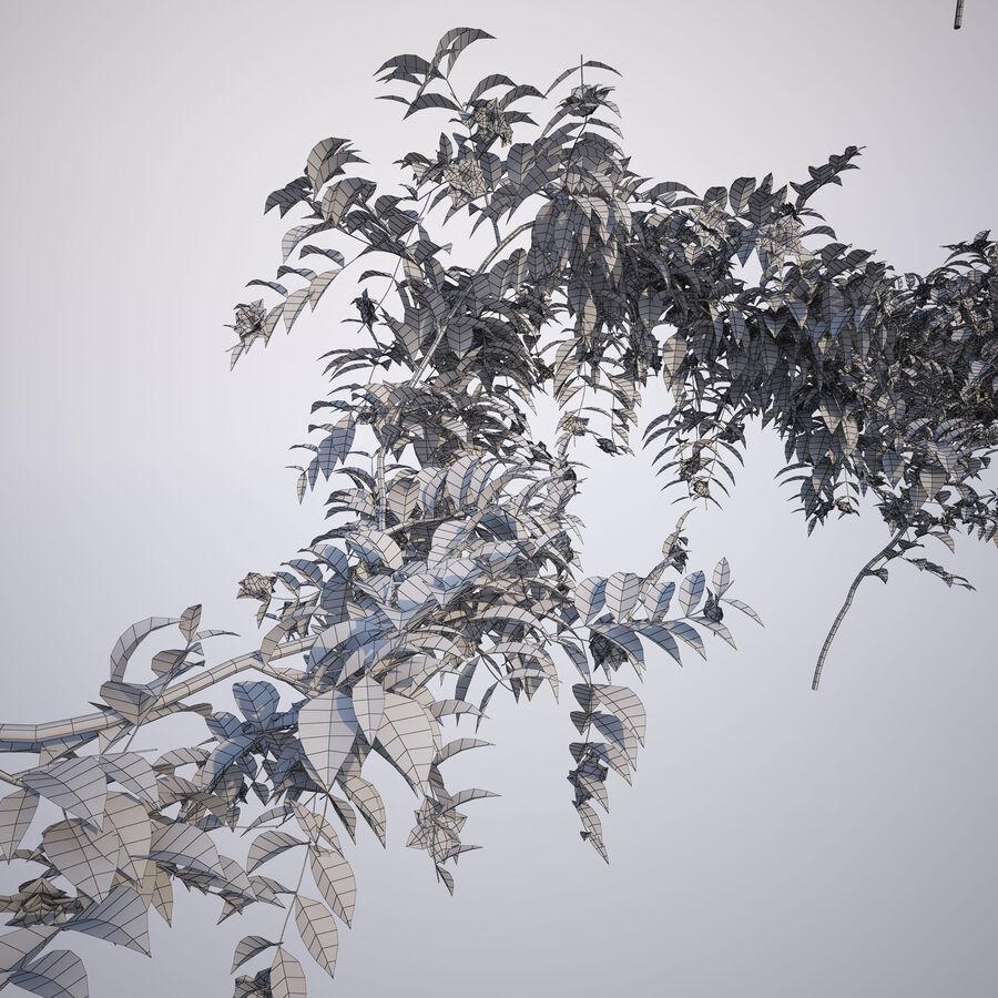 Generieke klimplanten royalty-free 3d model - Preview no. 8