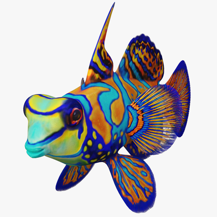 corals and coral fishes collection royalty-free 3d model - Preview no. 253