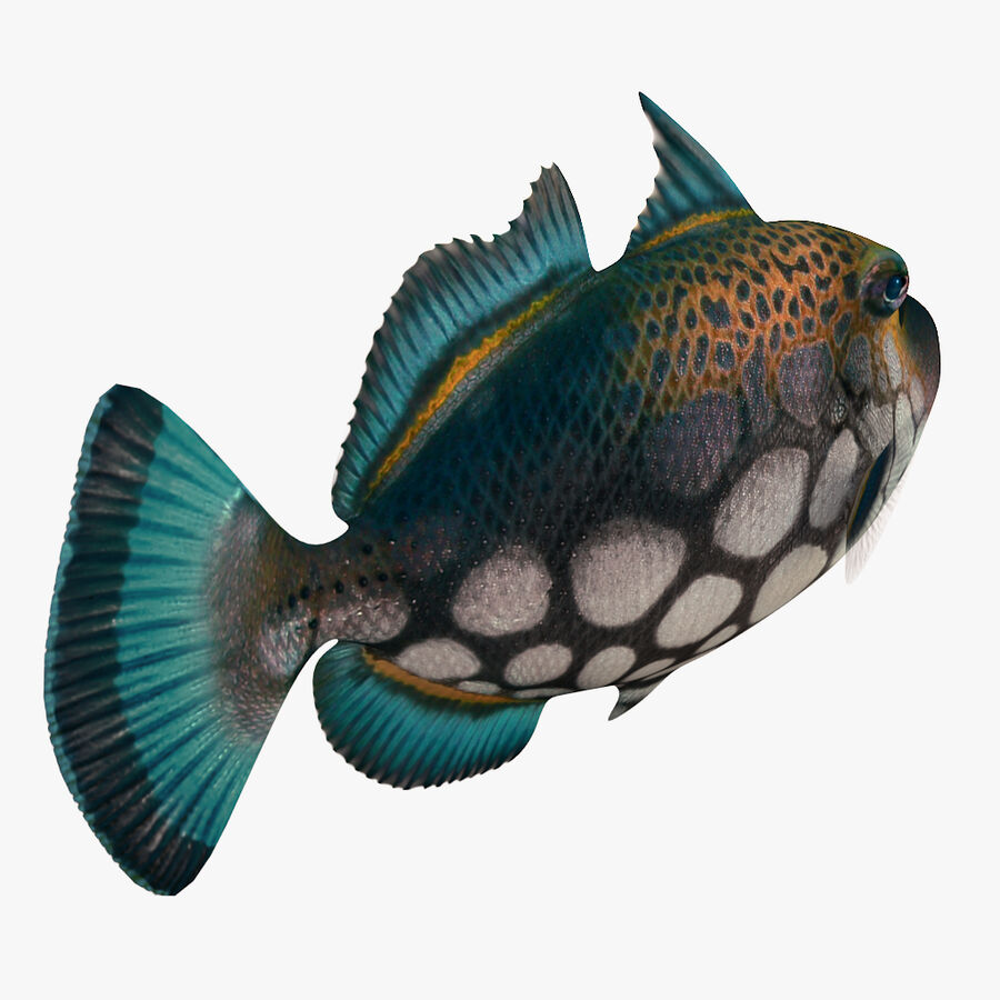 corals and coral fishes collection royalty-free 3d model - Preview no. 247