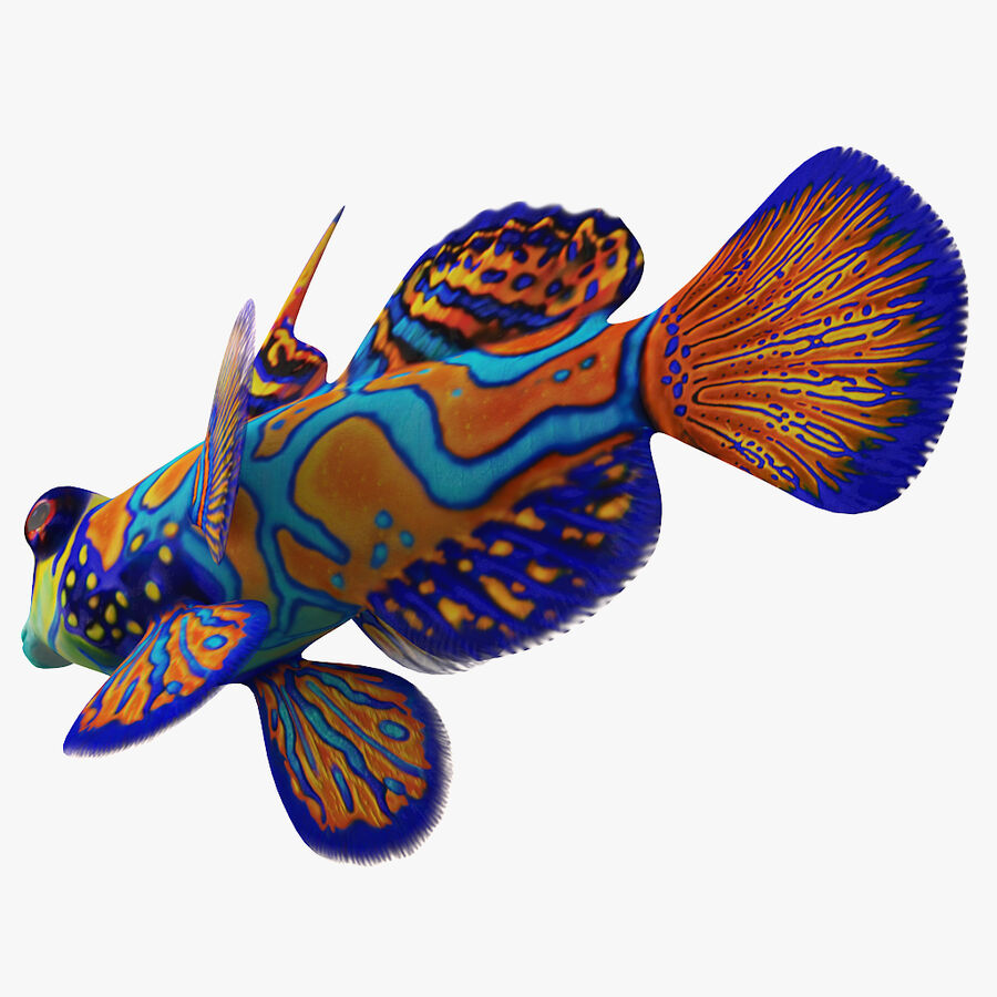 corals and coral fishes collection royalty-free 3d model - Preview no. 255
