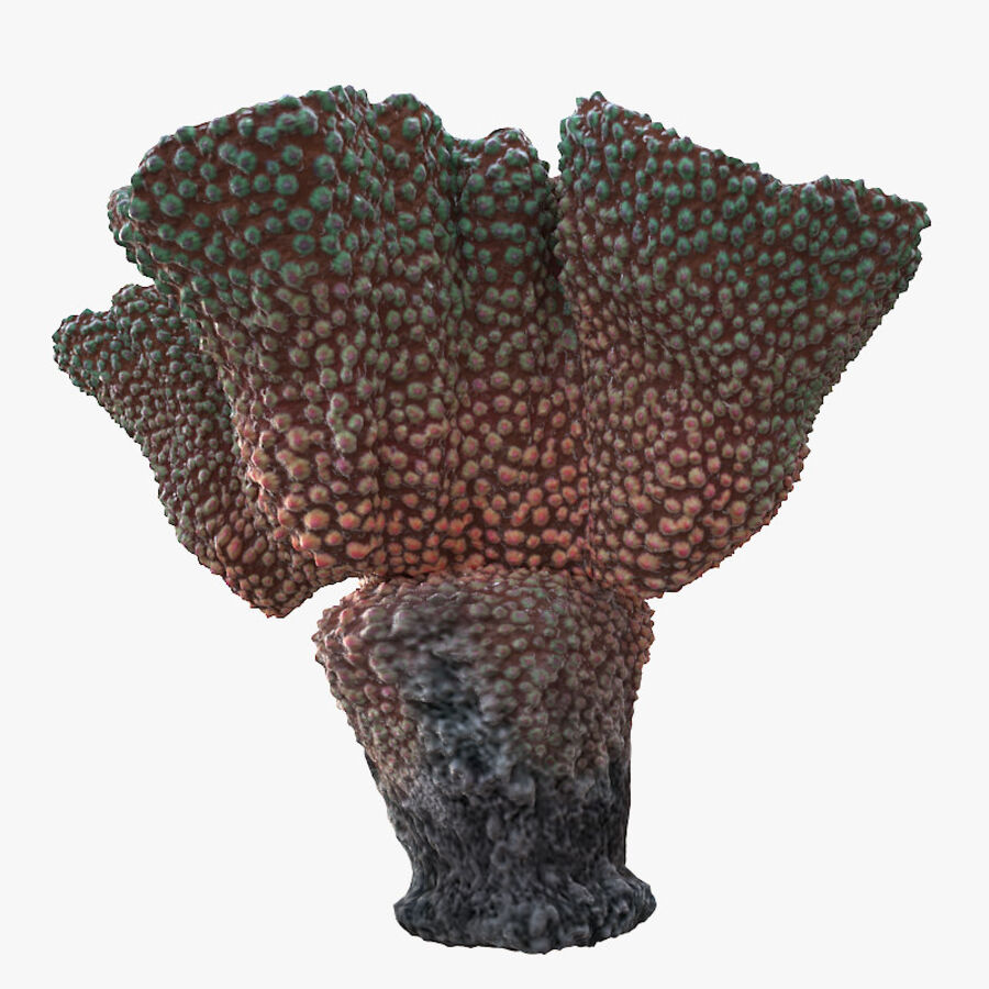corals and coral fishes collection royalty-free 3d model - Preview no. 198