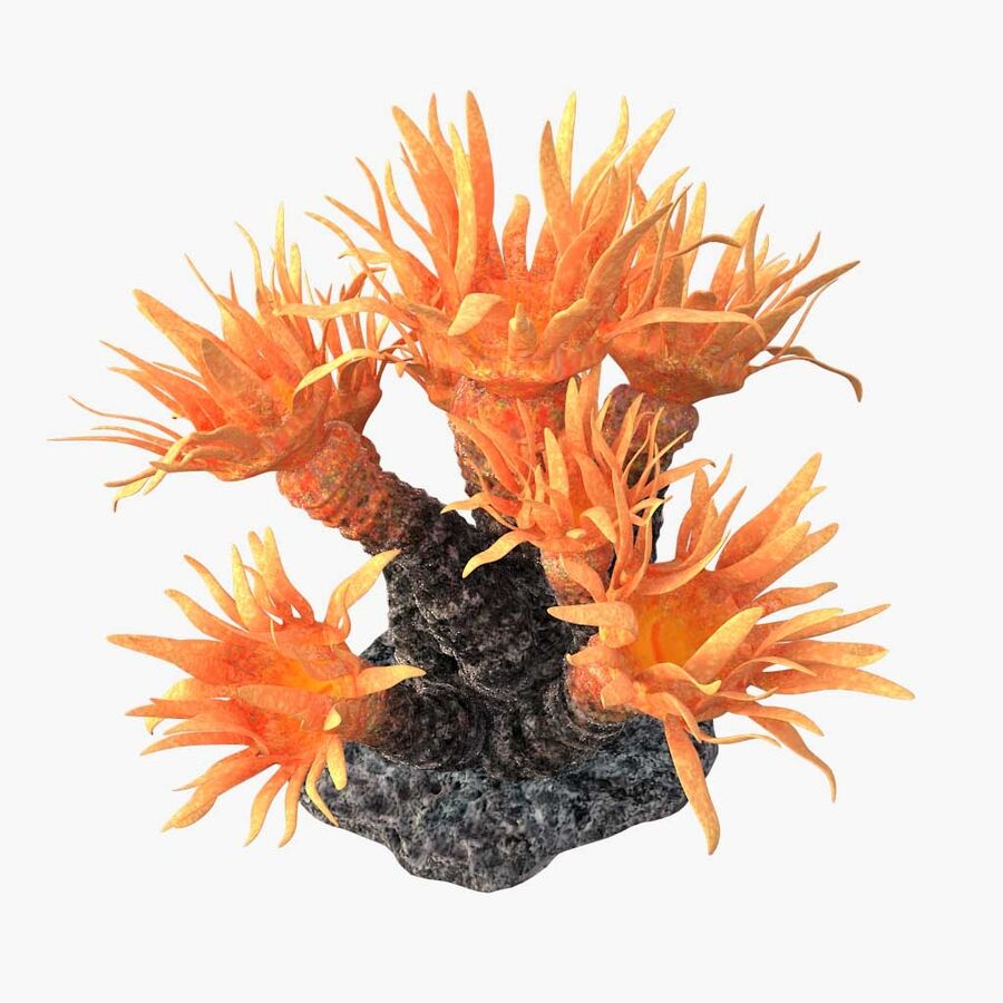 corals and coral fishes collection royalty-free 3d model - Preview no. 218