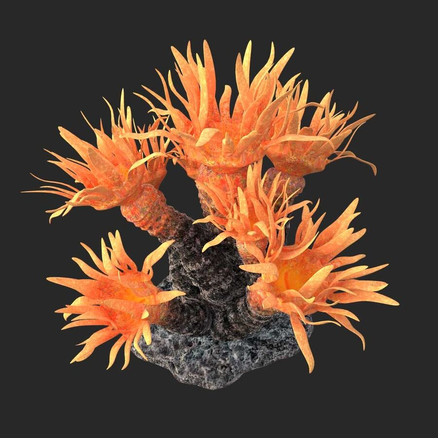 corals and coral fishes collection royalty-free 3d model - Preview no. 130