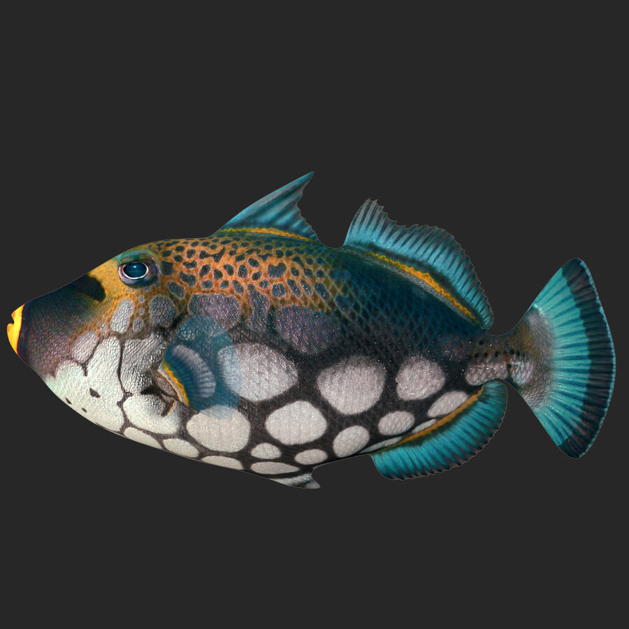 corals and coral fishes collection royalty-free 3d model - Preview no. 248