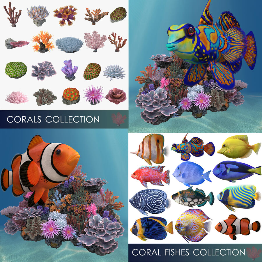 corals and coral fishes collection royalty-free 3d model - Preview no. 1