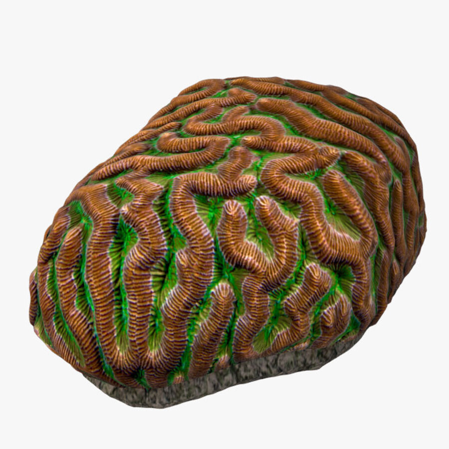 corals and coral fishes collection royalty-free 3d model - Preview no. 17