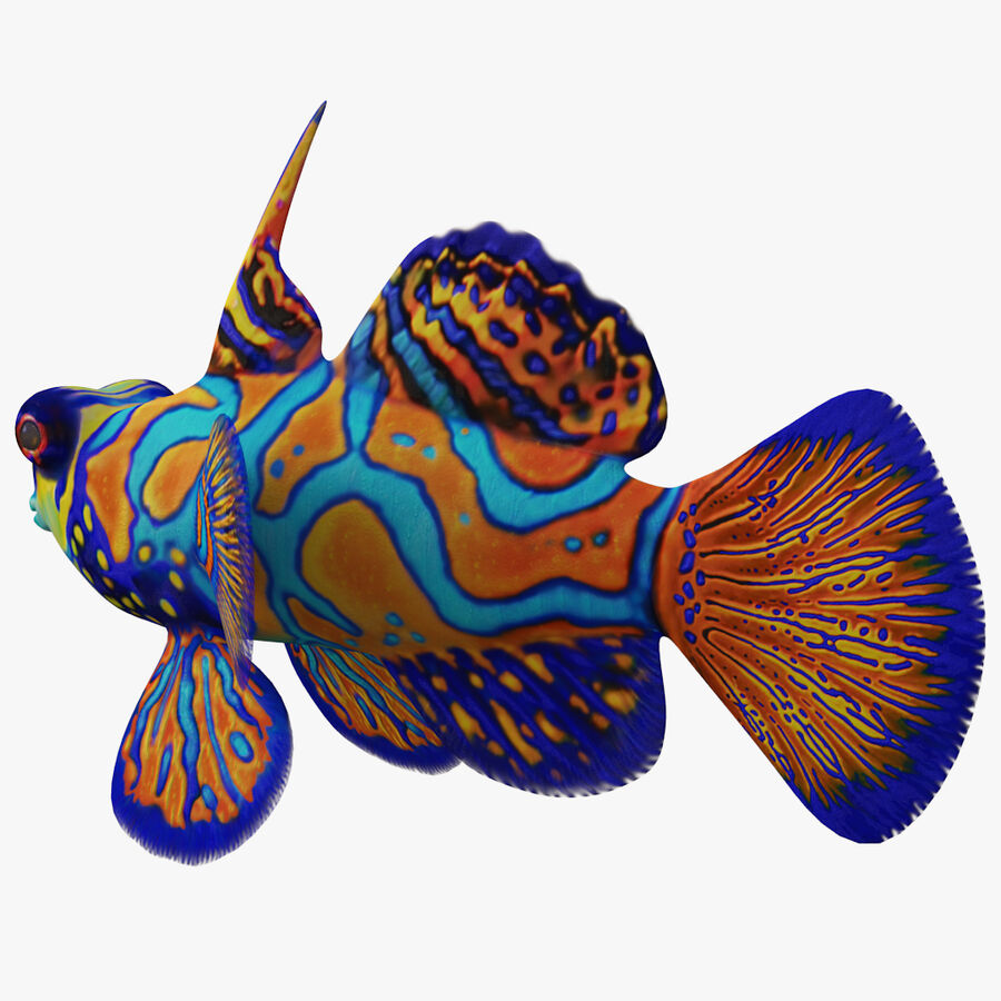 corals and coral fishes collection royalty-free 3d model - Preview no. 254