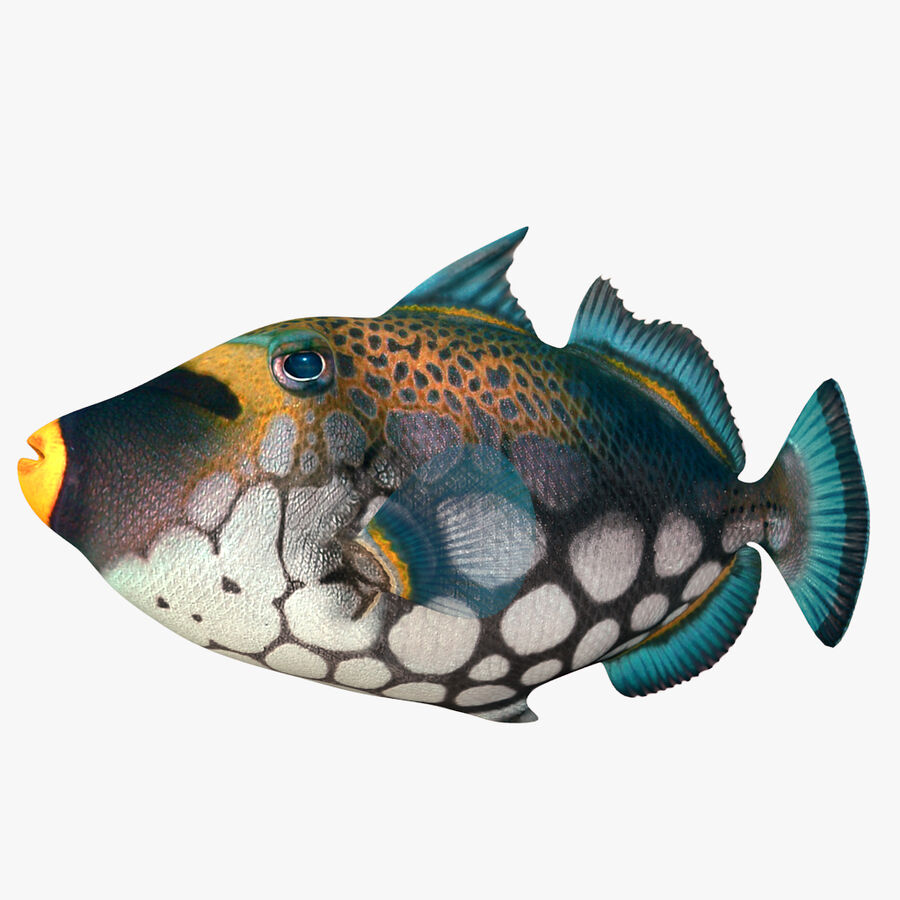 corals and coral fishes collection royalty-free 3d model - Preview no. 242