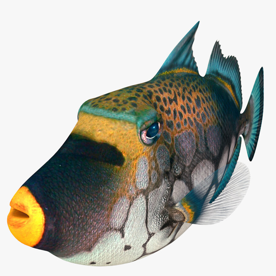 corals and coral fishes collection royalty-free 3d model - Preview no. 243