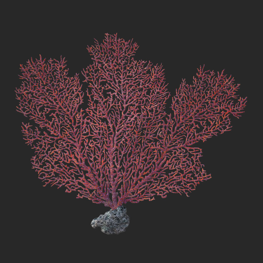 corals and coral fishes collection royalty-free 3d model - Preview no. 77