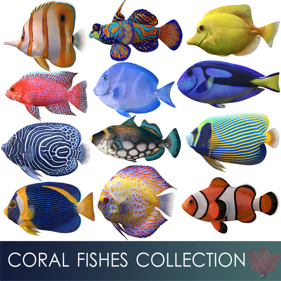corals and coral fishes collection royalty-free 3d model - Preview no. 3