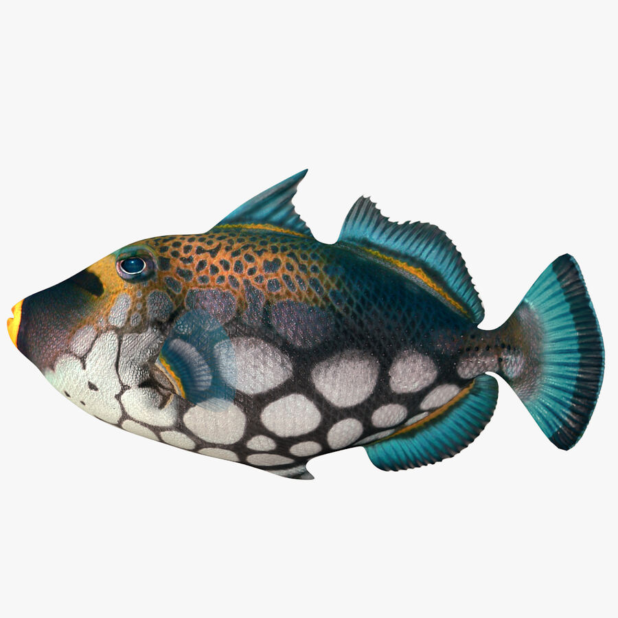 corals and coral fishes collection royalty-free 3d model - Preview no. 251