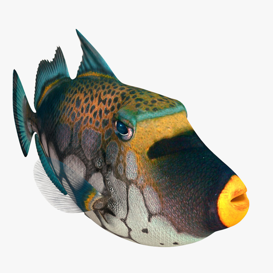 corals and coral fishes collection royalty-free 3d model - Preview no. 246