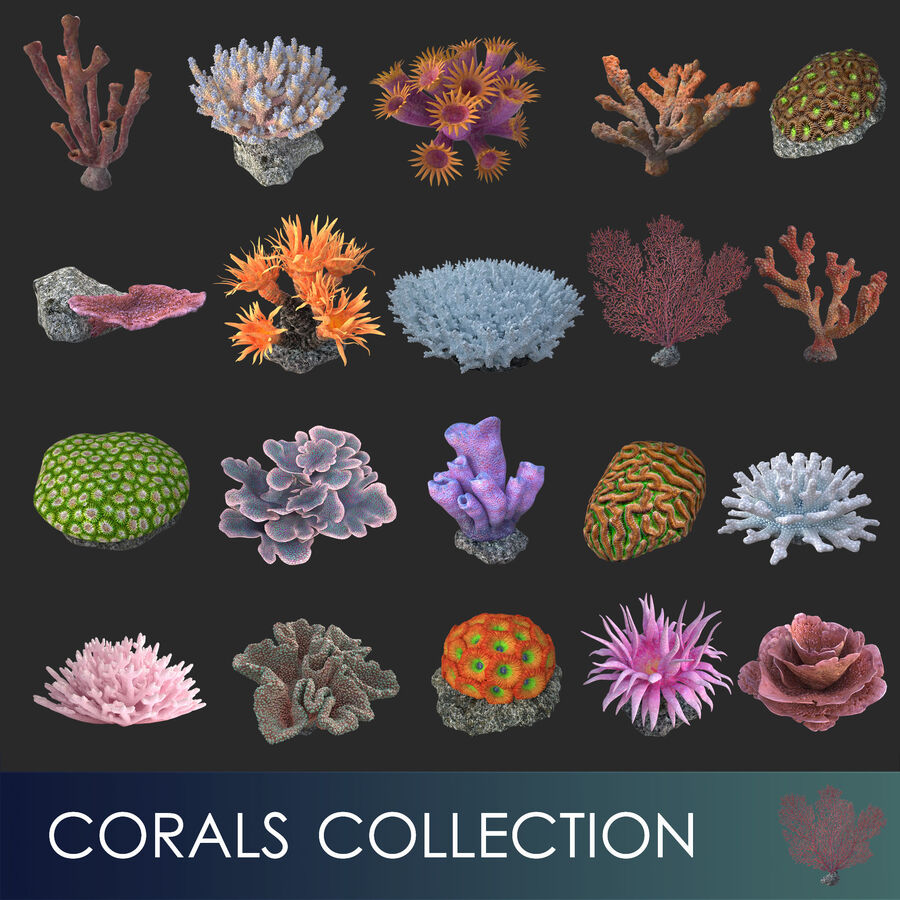 corals and coral fishes collection royalty-free 3d model - Preview no. 4