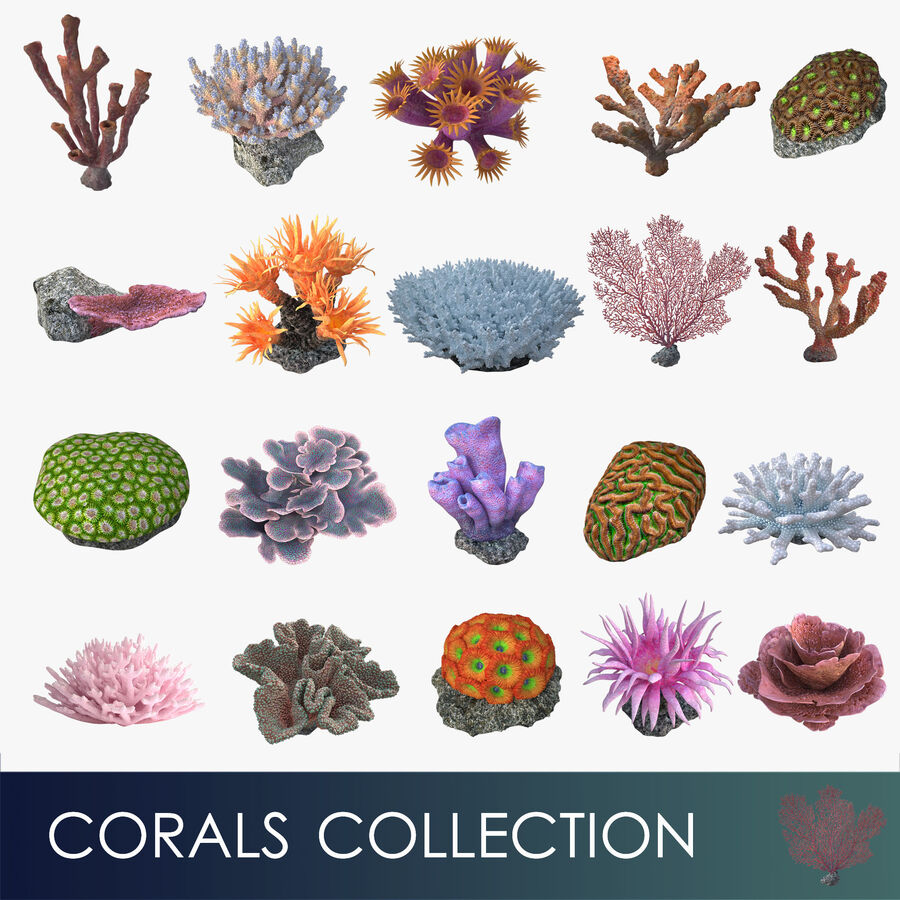 corals and coral fishes collection royalty-free 3d model - Preview no. 2